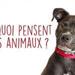 À quoi pensent les animaux